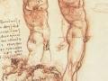 Anatomy-of-Male-Nude.jpg